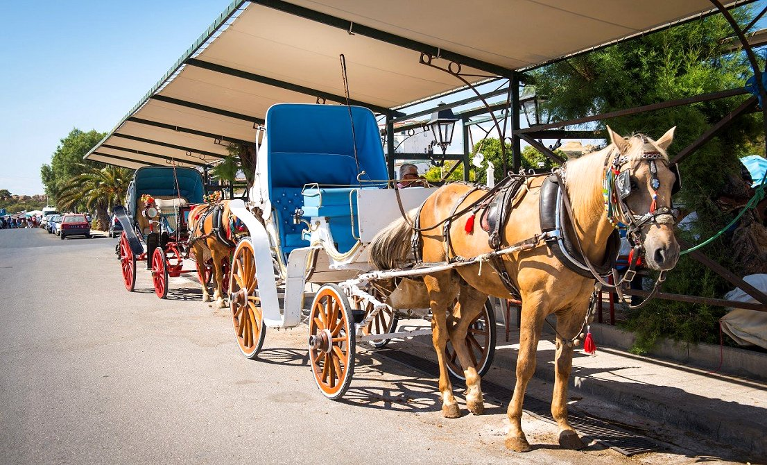 Horse carriage ride in Aegina island Greece - one-day cruise from Athens to 3 Greek islands - Athens one-day cruise - one-day cruise 3 islands Greece - Cruises in Greece - Greek cruises - Greek Travel Packages - Cruise Greek islands - Travel to Greek islands - Tours in Greece - Travel Agency in Greece